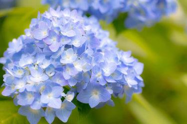 Tsuyu : La saison des pluies au Japon