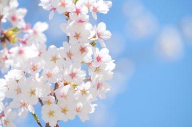 Hanami au Japon : Découvrez 3 endroits célèbres pour ses cerisier
