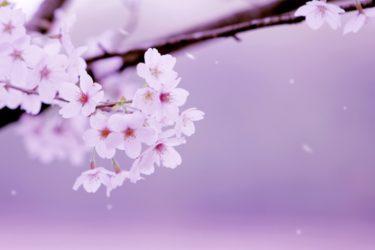 Hanami : Comment le hanami a été commencé ? Son histoire et son origine