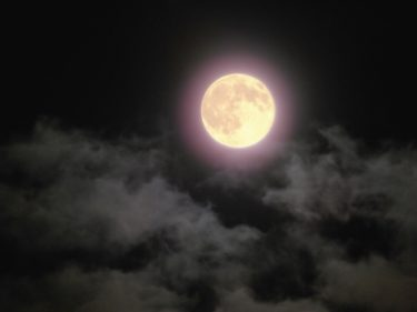 « Otsukimi » : L'événement qui consiste à admirer la lune le 15e jour d'août de l'ancien calendrier